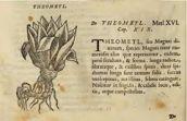 Theometl. Rerum Medicarum Novae Hispaniae Thesaurus