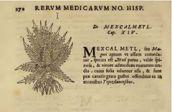 Mexcalmetl. Rerum Medicarum Novae Hispaniae Thesaurus